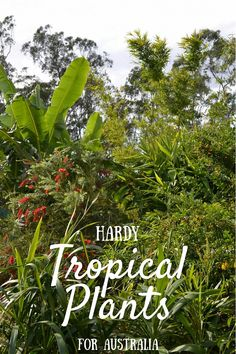 There's a tropical plant to suit every garden in Australia and I've compiled a list of some of our tropical plants which will thrive in hot climates. Hot climates can be a challenge for the gardener, unless you want to grow a rock garden or cacti gar Tropical Garden Design, Tropical Backyard, Tropical Landscaping, Landscaping With Rocks, Landscaping Ideas, Pool Backyard, Backyard Ideas, Dry Garden, Garden Trees