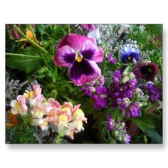 Pansy and Friends postcard from Zazzle.com