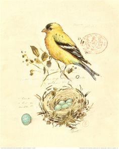 Позолоченный Songbird II печати Чад Барретт на Art.com