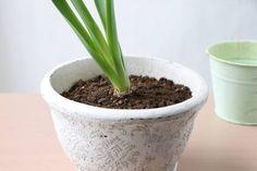 ほったらかしOK! ヒヤシンスの球根を来年も楽しむ方法 : 窪田千紘フォトスタイリングWebマガジン「Klastyling」暮らす+スタイリング Planter Pots, Garden, Garten, Lawn And Garden, Gardens, Gardening, Outdoor, Yard, Tuin