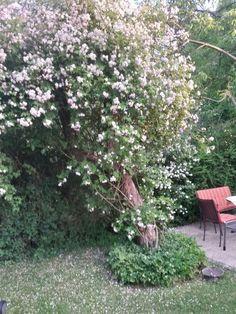 garten mediterraner stil ideen gartenmauer bepflanzen, Hause und Garten