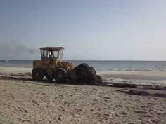 Djerba.Hotel Diana beach 3* Уборка водорослей