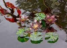 Monet's Water Lillies and Lilly Pads, glass flowers created by Craig Mitchell Smith