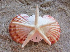 Item: White Finger Starfish With Scallop Shells And Sand Dollars  Barrette Length: 80 mm https://www.etsy.com/shop/HeavenlyMermaidHair