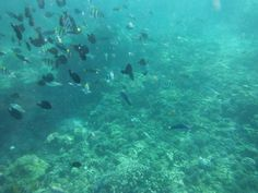 FISH FISH HELLO