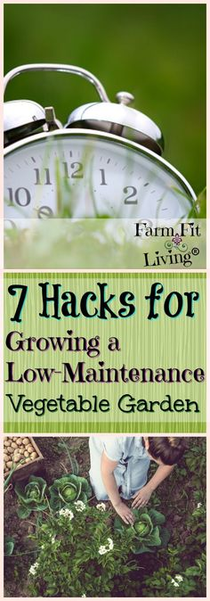 Do you feel like you're too busy to grow a successful garden? Here's 7 hacks for growing a low-maintenance vegetable garden that might help you find success. #vegetablegarden #gardenhacks via @www.pinterest.com/farmfitliving
