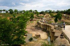 Réalisé en 2005 et implantée dans une carrière de 2 ha, la Grande Vallée des rhinocéros noirs se compose de terrasses en pente douce menant à une vaste plaine arborée et de grottes percées à même la roche.