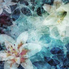 Gedurende de nacht groeien de waterlelies en geven schitterende kleuren
