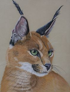 Caracal by *Sarahharas07 on deviantART ~ pastel pencils