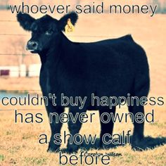 Yep this is so right. I agree completely. Every Show I go to is just another vacation to me. I love to show cattle. Cattle Barn, Show Cattle, Beef Cattle, Livestock Judging, Showing Livestock, Farm Animals, Cute Animals, Funny Animals, Cow Quotes
