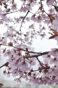 puu Flora, Cherry, Easter, Seasons, Spring, Plants, Summer, Gold, Photography