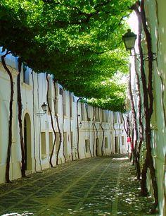 Jerez, Spain Beautiful World, Beautiful Places, Places To Travel, Places To Go, Parks, Earthship, Dream Garden, Landscape Architecture, Exterior Design