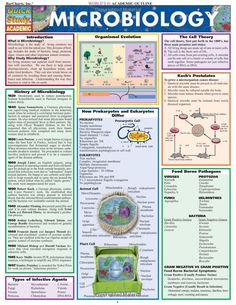 Available in: Other Format.The basic principles of microbiology. Reference for any student studying biology or microbiology from high school to Medical Laboratory Science, Biomedical Science, Science Biology, Life Science, Forensic Science, Teaching Biology, Computer Science, Science Books, Igcse Biology