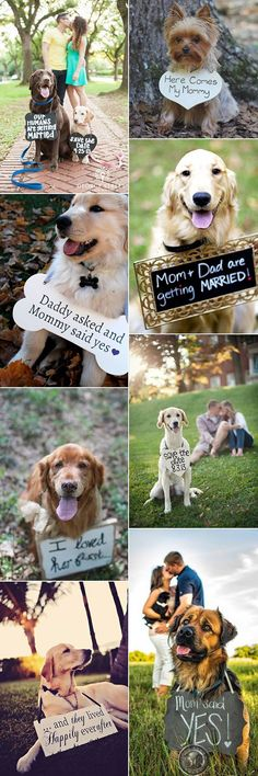 precious wedding photo ideas with dogs
