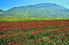 Sibillini Mountains and Poppies... by Renato Pantini on 500px