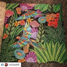 Coloring Books Adult Animal Kingdom Color Inspiration Palettes Photo And Video Wonderland Journals Tropical Book Chance