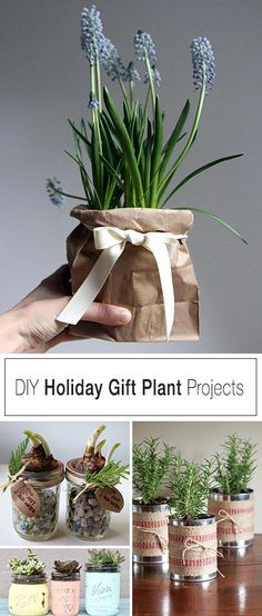 DIY Holiday Gift Plant Projects • Great Ideas and Tutorials for Plant Gifts for the holidays!