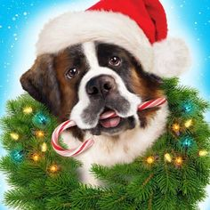 St Bernard as Beethoven Chubby Puppies, Dogs And Puppies, St Bernard Dogs, I Love Dogs, Picture Video, Saints, Drawings, Cute, Bobs