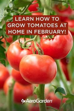 Tips For Growing Tomatoes, Growing Vegetables, Growing Plants, Starting A Vegetable Garden, Vegetable Garden Design, Container Gardening Vegetables, Vegetable Gardening, Veggie Gardens, Mini Gardens