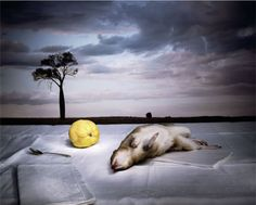 Marian Drew, Australiana/Still Life, 2003-2009