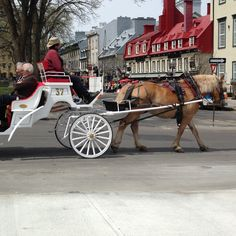 Tour the city by horse & carriage