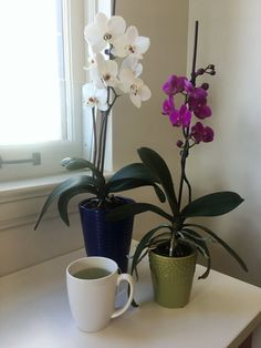 Rebloom Your Orchids With This 1 Simple Pantry Staple - Orchideen Indoor Orchids, Orchids Garden, Orchid Plants, All Plants, Garden Plants, Indoor Plants, Potted Plants, Orchid Repotting, Orchid Seeds