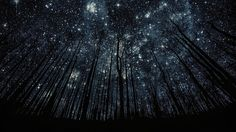 "Starry night in a forest near Geneva, Switzerland.   The backdrop here looks almost like it's make-believe. The never ending trees tickle your imagination as the bright patches of stars demand your attention. The dark contrast of trees adds even more intensity to be stunning stars. Entitled ""Sillhouettes"", this stunning shot was captured by Harry Finder."