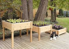 There are many benefits to using raised vegetable garden beds in your garden. For starters, elevated garden beds are easier on your back and knees because they require less bending, kneeling and crawling than . Raised Garden Planters, Garden Planter Boxes, Garden Table, Raised Garden Beds, Raised Beds, Box Garden, Herb Garden, Raised Patio, Backyard Planters