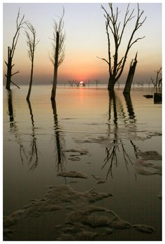 Drowned Trees Sunset 03 by michref on DeviantArt Places Worth Visiting, Famous Places, Night Skies, Bella, Places Ive Been, Traveling, Wanderlust, Weather, In This Moment
