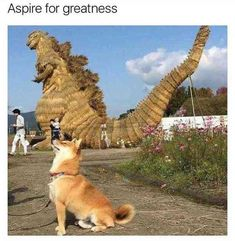 dream big | TrendUso #dog #dogs #shiba #shibainu #dinosaur #dinosaurday #statue #cute #adorable #aspire #cutest #CuteAnimals #Cuteness #funny #hilarious #humor #humorous #humour #meme #memes #memesdaily #lol #wtf #omg #rofl #haha