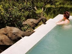 Yes, this is for real - every room at South Africa's luxurious Royal Malewane has a private pool and this could be you. Photo: Royal Malewane When most people go on vacation to South Africa, they go on safari. And when people go on a luxury safari to Sout Mauritius, Parc National Kruger, Kruger National Park Safari, Places To Travel, Places To Go, Cap Vert, Game Lodge, Le Cap, Plunge Pool