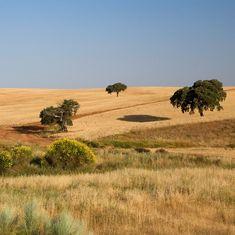 A beleza dos nossos campos!  #verão #paisagem #campo #natureza #herdadedosgrous #alentejo #portugal #flores #vidaselvagem