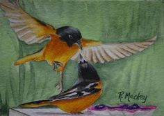 These are 2 of 5 male orioles who have been fighting over the grape jelly in my back yard.  Seems only one can eat at a time.  I thought the position of these said, Hey, let's share.  Happy Bidding.