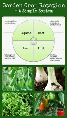 Garden Crop Rotation - Why and how to rotate your crops for healthier gardens.