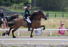 Icelandic Horses   Flickr - Photo Sharing!