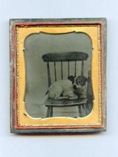 Victorian pup.