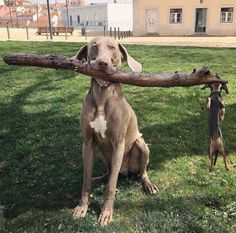 30Photos ofthe Totally Hilarious Creatures WeCall Dogs (Alert: Your Sides May Cramp From Laughter)