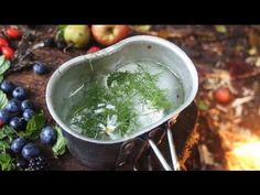 9 Wild Teas for Survival. Their Medicinal, Nutritional Benefits May Help You Survive - The Good Survivalist