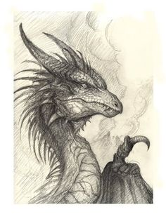 drawings of dragons heads - Google Search