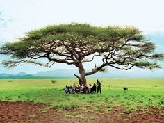 The 25 Best Safari Guides : Condé Nast Traveler