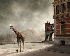 la girafe du chateau (photographie : Mattijn Franssen)