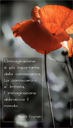... Perle da condividere - Lio Site Freedom Life, Italian Quotes, Something To Remember, Inspirational Phrases, I Cool, Osho, Pictures To Paint, True Words, Beautiful Words