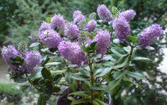 13 Mejores Imágenes De Planta Resistente Al Frio Outdoor Plants