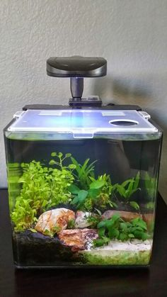 The last remodel didn't do well, so here is another try.  Evolve 2 nano low tech planted aquarium.