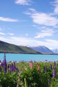 Purple Lavender by the Lake