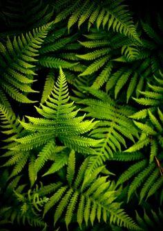 Green © Joni Niemela