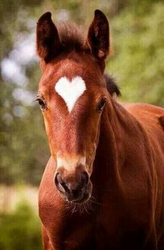 I call it a miracle that a horse can be born with a perfect heart for a temple marking!