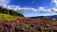 Ireland - Wicklow is a county of Ireland that is south of Dublin. It is known for its beautiful scenery including this field in the Wicklow Hills.    Photography by Chris Hill.