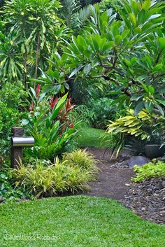 50 Awesome Front Yard Side Yard and Back Yard Landscaping Design Idea - Tropical Garden Design, Tropical Backyard, Tropical Landscaping, Tropical Plants, Backyard Landscaping, Landscaping Design, Tropical Gardens, Tropical Style, Bali Garden