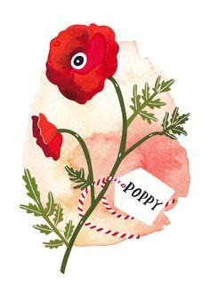 Red Poppy - Archival art print. $15.00, via Etsy. (in case Peanut is a girl)